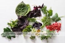RBC-LR-Herbs 230616 007